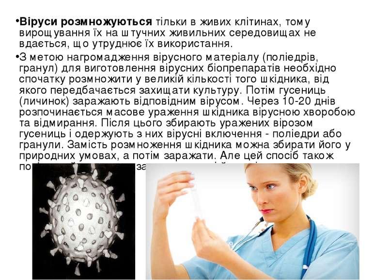 Віруси розмножуються тільки в живих клітинах, тому вирощування їх на штучних ...