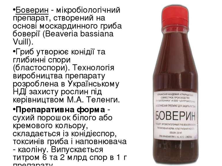 Боверин - мікробіологічний препарат, створений на основі москардинного гриба ...