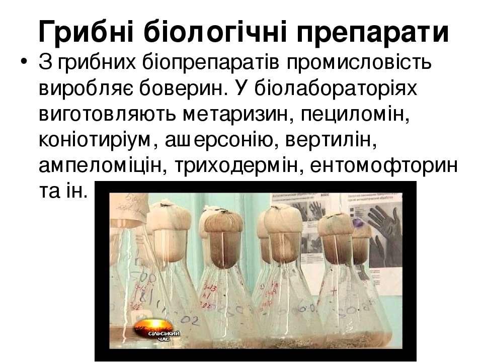 Грибні біологічні препарати З грибних біопрепаратів промисловість виробляє бо...