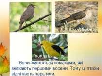 Лебеді Лелека Дикі качки Вони живляться комахами, які зникають першими восени...