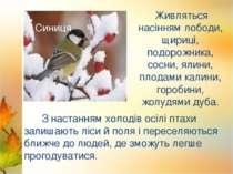 З настанням холодів осілі птахи залишають ліси й поля і переселяються ближче ...