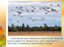 Лебеді Лелека З настанням осені змінюється життя птахів. Вони не можуть знайт...