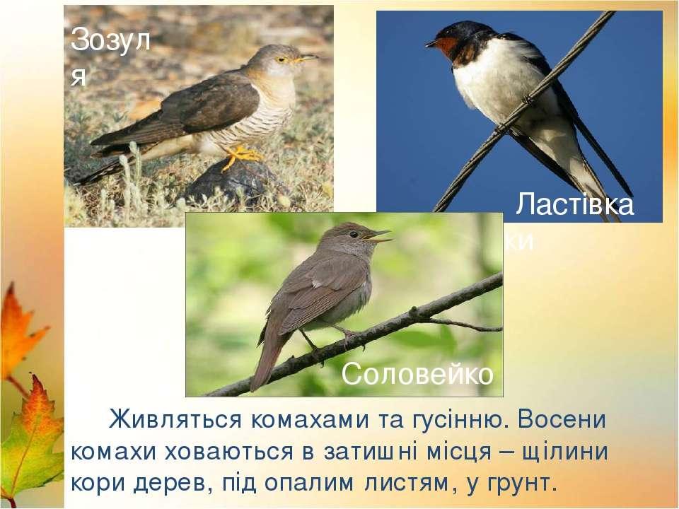 Лебеді Лелека Дикі качки Живляться комахами та гусінню. Восени комахи ховають...