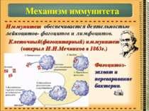 Иммунитет обеспечивается деятельностью лейкоцитов- фагоцитов и лимфоцитов. Ме...