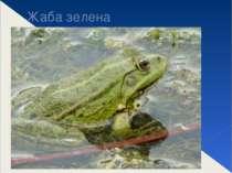 Жаба зелена