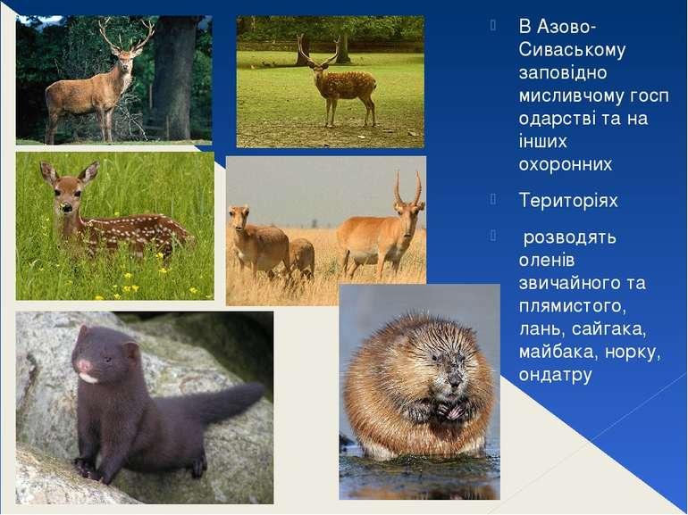 В Азово-Сиваському заповідно мисливчомугосподарстві та на інших охоронних Т...