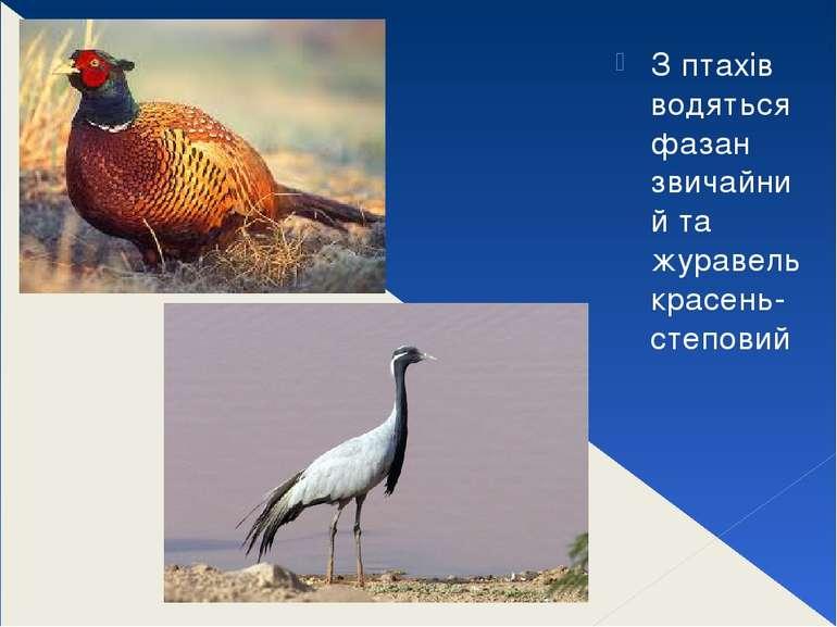 З птахів водяться фазан звичайний та журавель красень-степовий