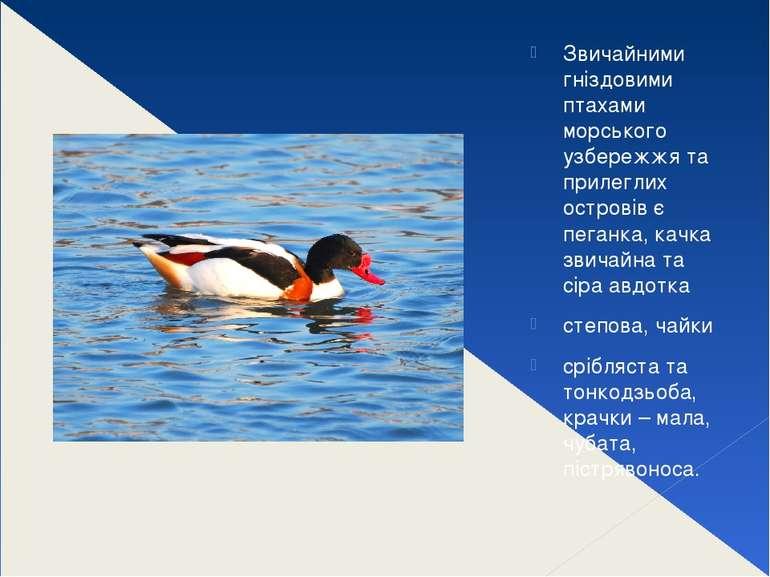 Звичайними гніздовими птахами морського узбережжя та прилеглих островів є пег...