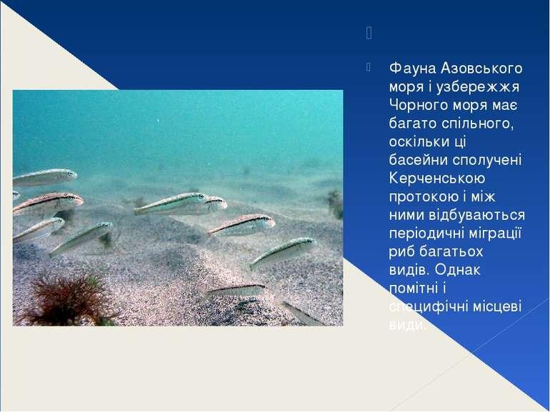 Фауна Азовського моря і узбережжя Чорного моря має багато спільного, оскіль...