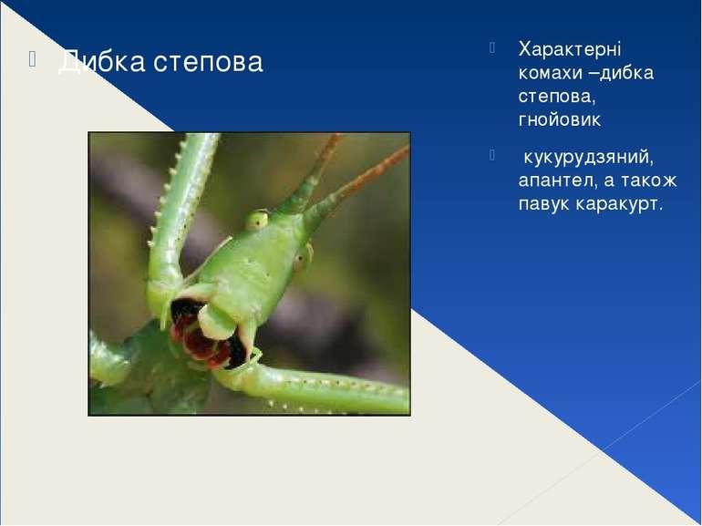 Характерні комахи –дибка степова, гнойовик кукурудзяний, апантел, а також па...
