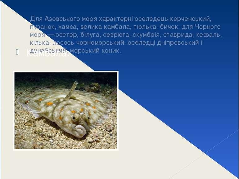 Для Азовського моря характерні оселедець керченський, пузанок, хамса, велика ...