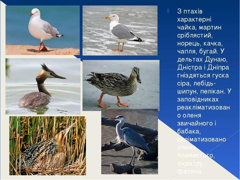 З птахів характерні чайка, мартин сріблястий, норець, качка, чапля, бугай. У ...