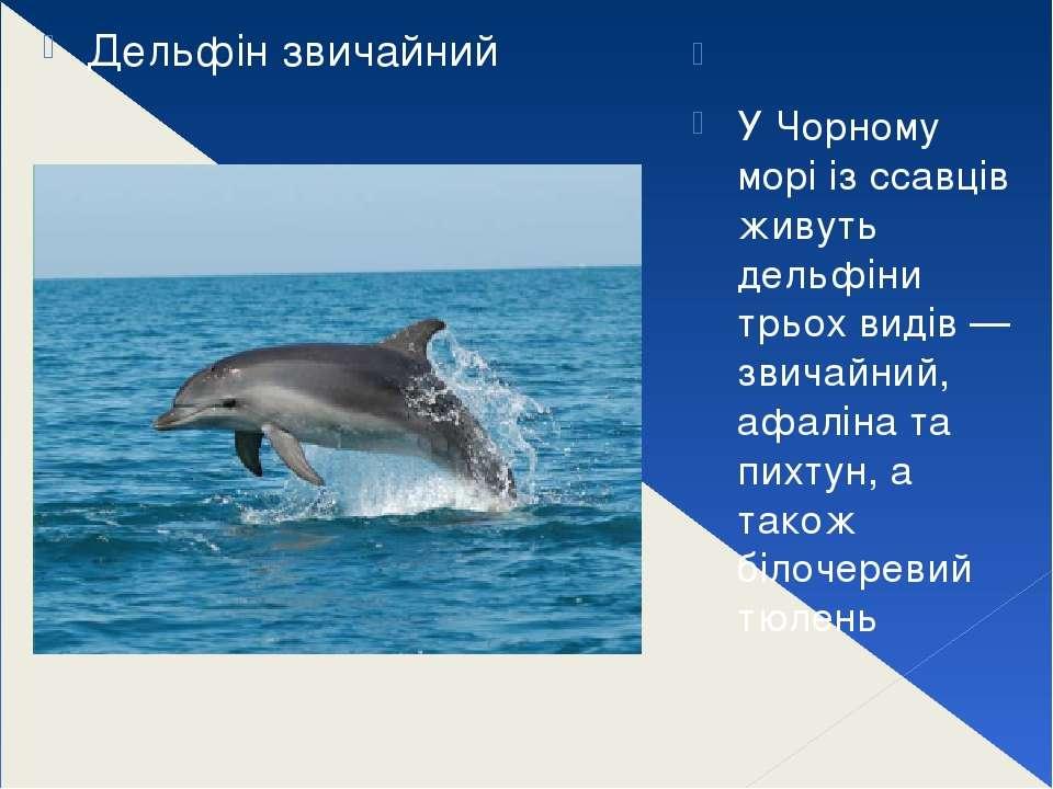 У Чорному морі із ссавців живуть дельфіни трьох видів — звичайний, афаліна ...