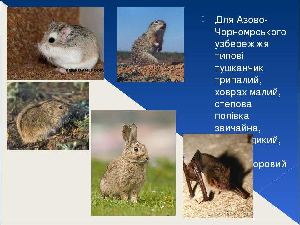 Для Азово-Чорномрського узбережжя типові тушканчик трипалий, ховрах малий, ст...