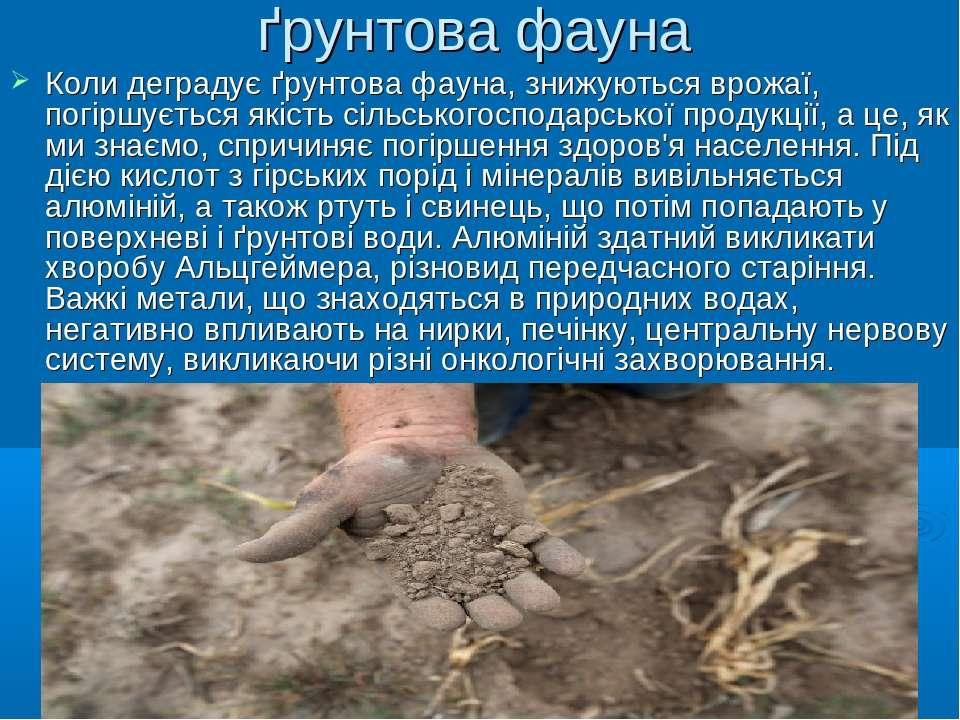 ґрунтова фауна Коли деградує ґрунтова фауна, знижуються врожаї, погіршується ...