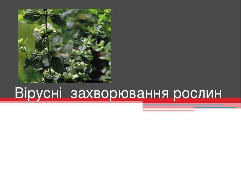 Вірусні захворювання рослин