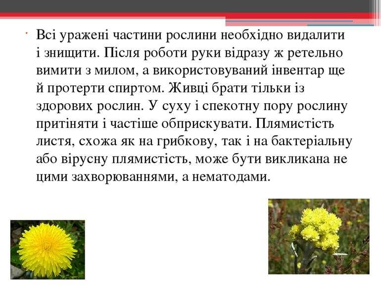 Всі уражені частини рослини необхідно видалити ізнищити. Після роботи руки в...