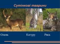 Сутінкові тварини Олень Кегуру Рись