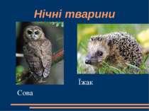 Нічні тварини Сова Їжак