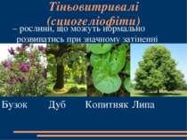 Тіньовитривалі (сциогеліофіти) – рослини, що можуть нормально розвиватись пр...