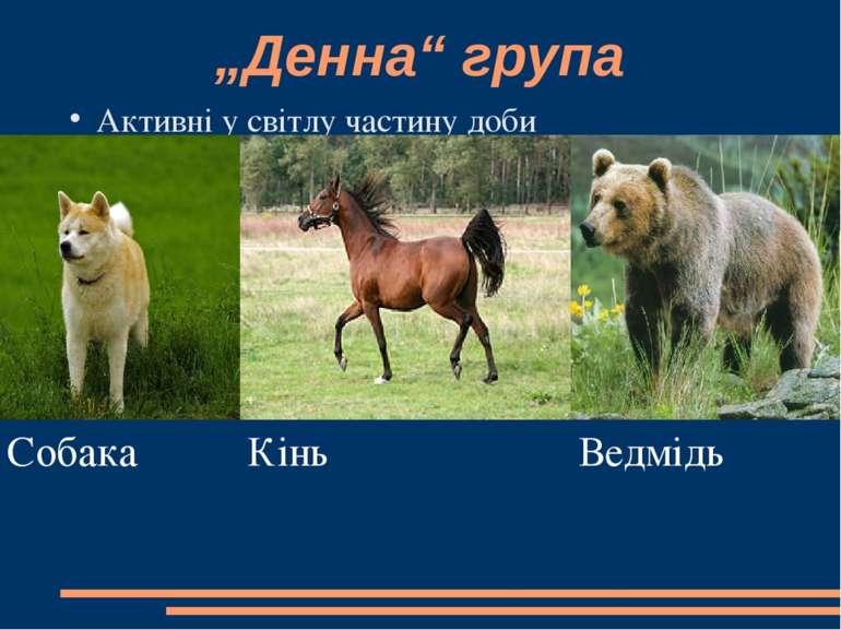 """""""Денна"""" група Активні у світлу частину доби Собака Кінь Ведмідь"""