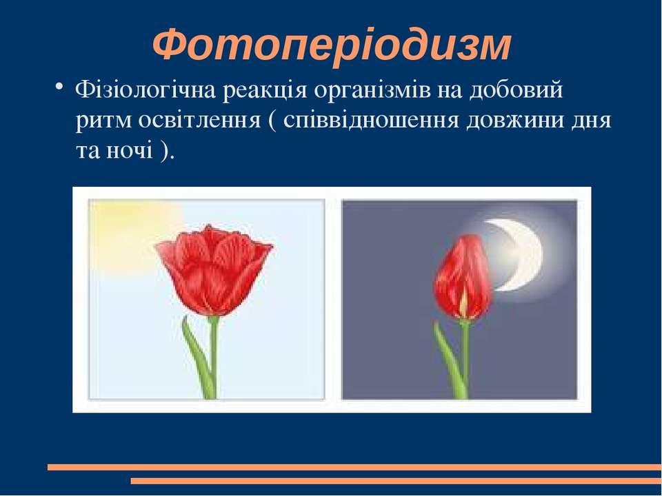 Фотоперіодизм Фізіологічна реакція організмів на добовий ритм освітлення ( сп...