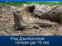 Ряд Дзьобоголові гатерія (до 76 см)