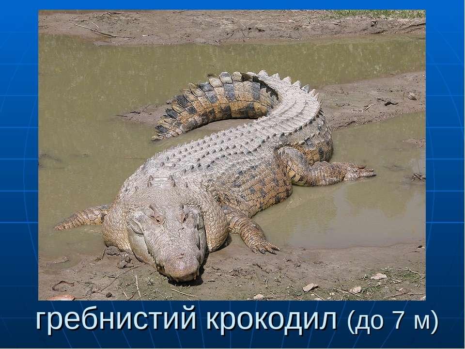 гребнистий крокодил (до 7 м)