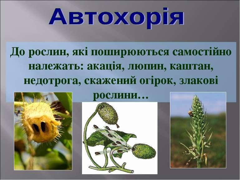 До рослин, які поширюються самостійно належать: акація, люпин, каштан, недотр...