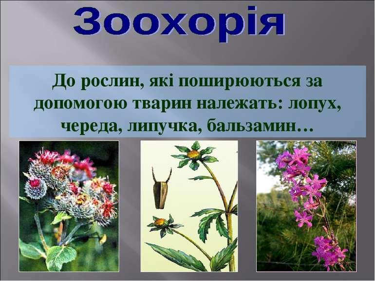 До рослин, які поширюються за допомогою тварин належать: лопух, череда, липуч...