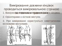Вимірювання довжини кінцівок проводиться вимірювальною стрічкою за певними пр...