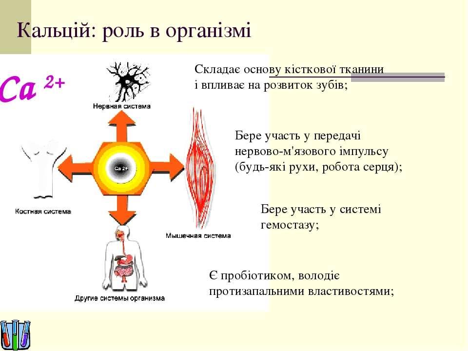 Кальцій: роль в організмі Складає основу кісткової тканини і впливає на розви...