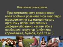 Вегетативне розмноження При вегетативному розмноженні нова особина розвиваєть...