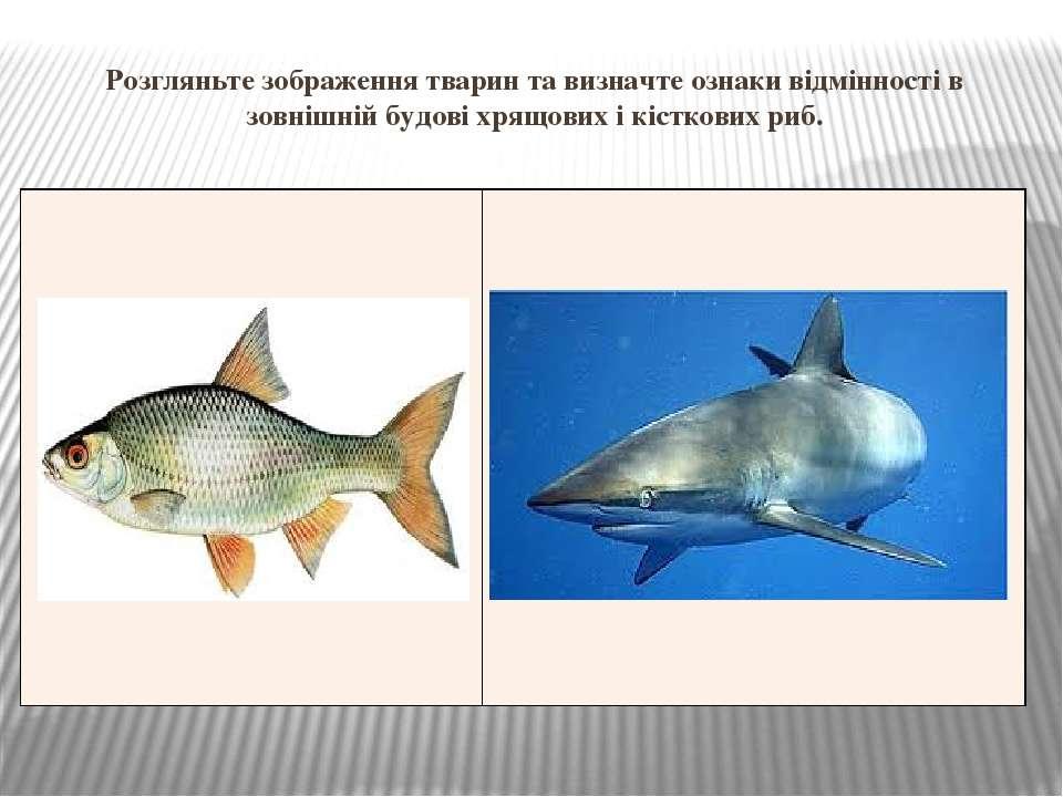 Розгляньте зображення тварин та визначте ознаки відмінності в зовнішній будов...