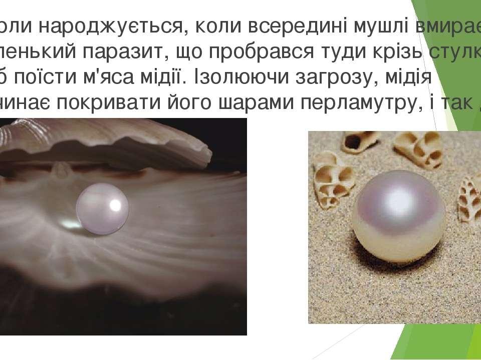 Перли народжується, коли всередині мушлі вмирає маленький паразит, що пробрав...