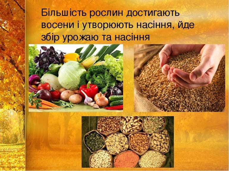 Більшість рослин достигають восени і утворюють насіння, йде збір урожаю та на...