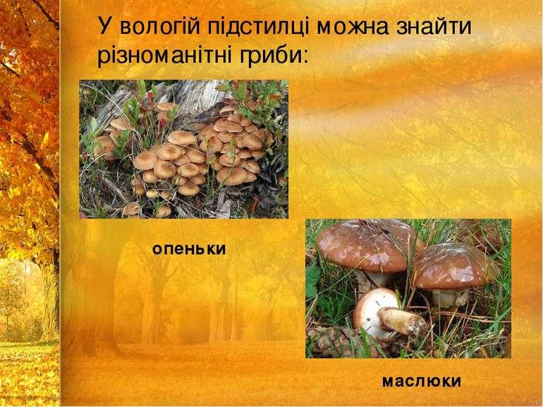 У вологій підстилці можна знайти різноманітні гриби: опеньки маслюки