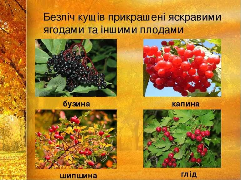 Безліч кущів прикрашені яскравими ягодами та іншими плодами бузина калина шип...