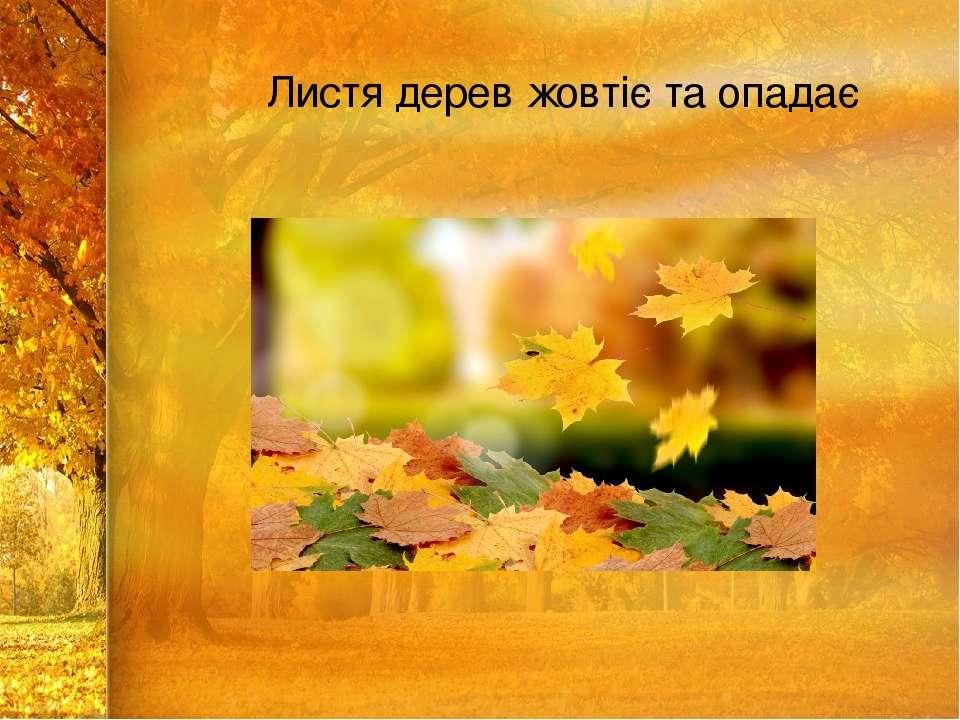 Листя дерев жовтіє та опадає