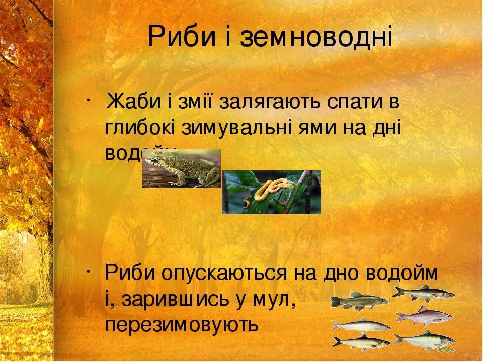 Риби і земноводні Жаби і змії залягають спати в глибокі зимувальні ями на дні...