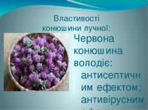 Червона конюшина володіє: антисептичним ефектом; антивірусним ефектом; протиз...
