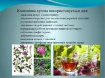 Конюшина лугова використовується для: зниження цукру і холестерину; лікування...
