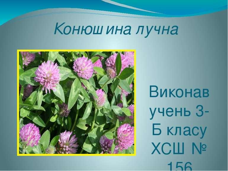 Конюшина лучна Виконав учень 3-Б класу ХСШ № 156 Мельников Владислав