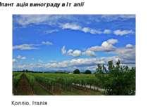 Плантація винограду в Італії Колліо. Італія