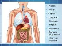 Серце Легені Печінка Шлунок Нирки Статеві органи Кишечник Органи виділення Мозок