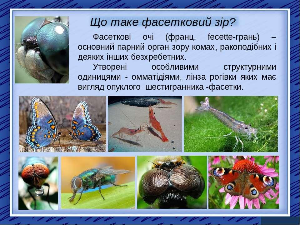 Фасеткові очі (франц. fecette-грань) – основний парний орган зору комах, рако...