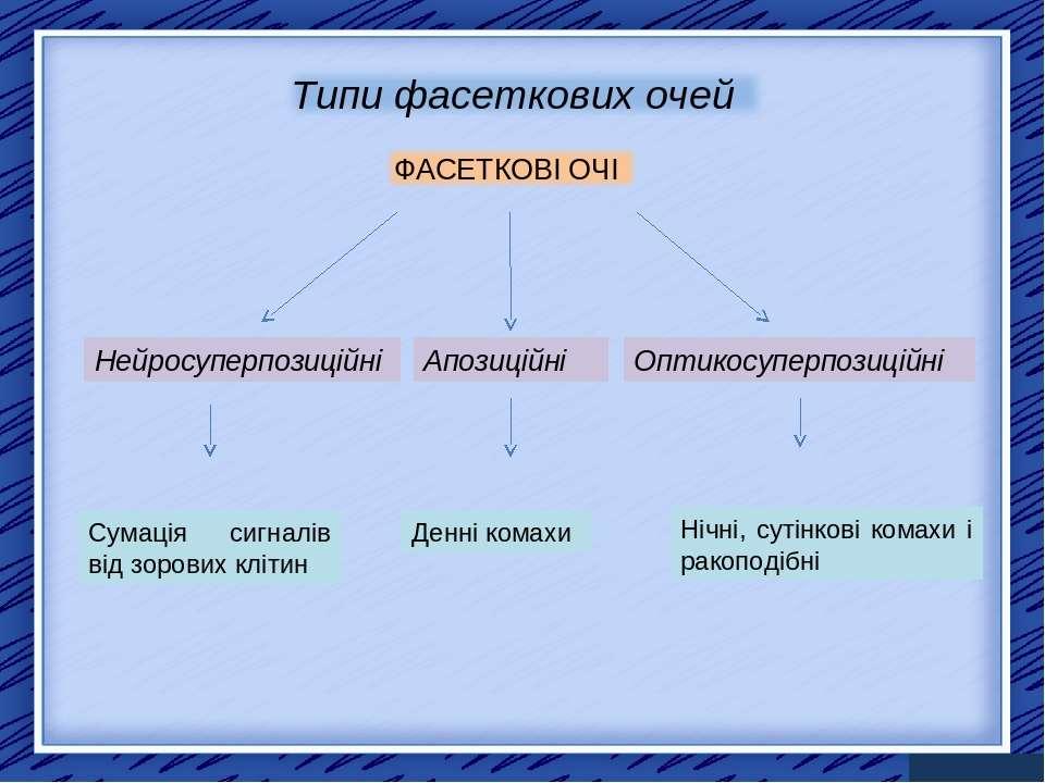 Нейросуперпозиційні Апозиційні Оптикосуперпозиційні Сумація сигналів від зоро...