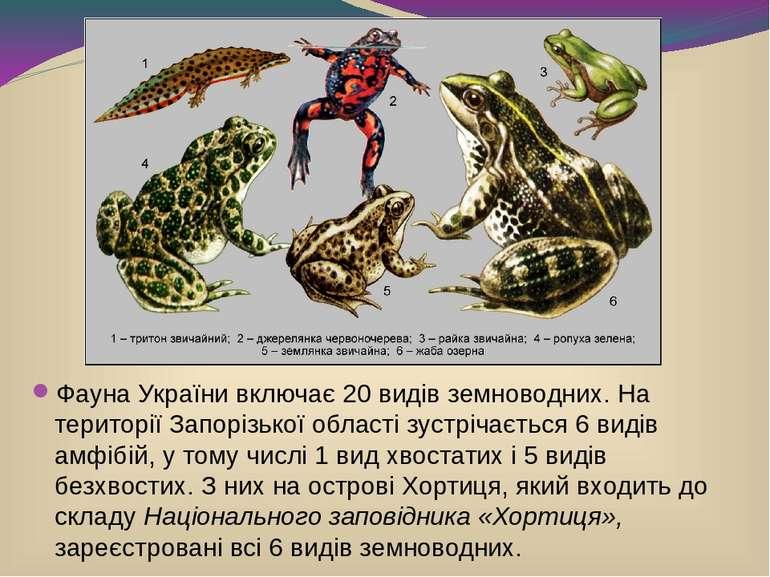 Фауна Українивключає 20 видівземноводних. На території Запорізької області ...