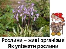 Рослини – живі організми Як упізнати рослини