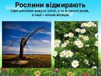 Рослини відмирають Одні рослини живуть сотні, а то й тисячі років, а інші – к...